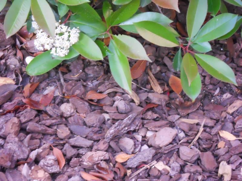 Corteza decorativa para jardin