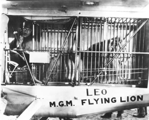 MGM Lion Jackie photo