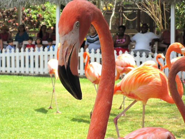No zoom needed, friendly Flamingo!