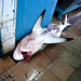 Shark in Jeddah fish market - Saudi Arabia