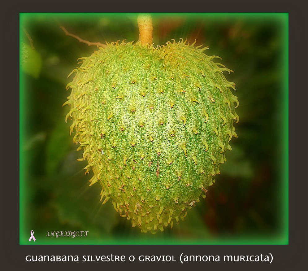 Tropical Fruit Tree Graviola (Annona muricata) A HOPE TO Kill Cancer Cells