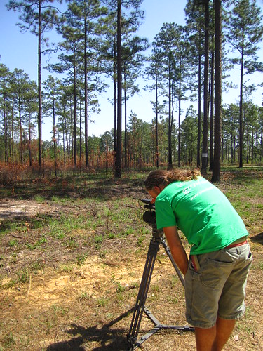 Joe filming at longleaf pine savannah