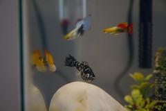 20110326 - Aquarium Fish