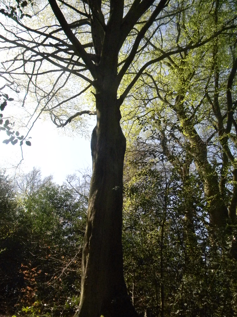 Tree like a squid Oxted Circular