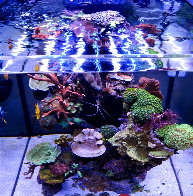 Solanaxl60 Cube Aquarium And Panoramaled Flickr Photo