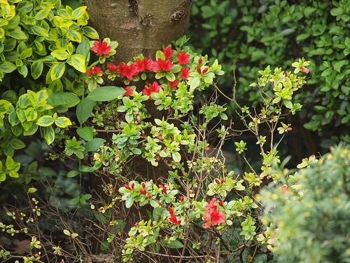 Small Flower Garden Ideas Photograph Small Flower Garden I