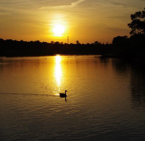 park sunset lake columbusga columbusgeorgia coopercreekpark