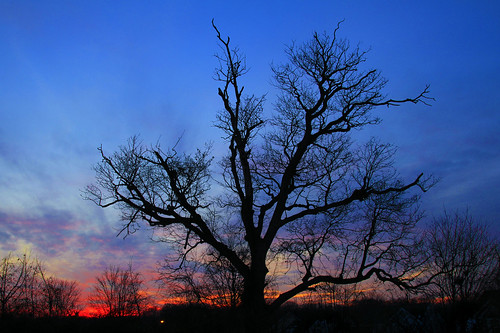 Ugly Tree, Beautiful Sunset by Darren LoPrinzi