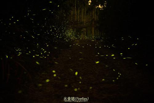 古坑-101年華山賞螢活動辦法 4月13日至5月28日