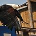 Zoo Amnéville-2010-395 ©mfld57