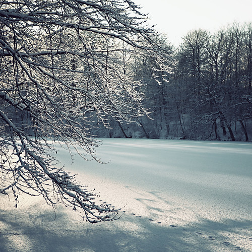 trees winter lake snow ice forest landscape denmark is vinter træer danmark winterwonderland 2010 sne kolding skov sø backindecember marielundskoven marielundsøen canoneos5dmrkii