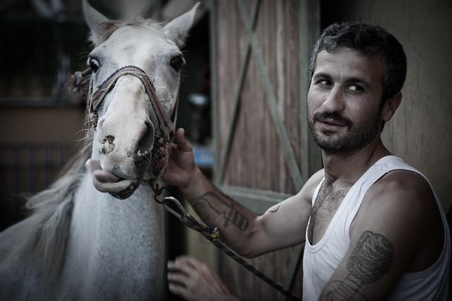 buyukada, horse