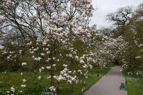 ...The Magnolia Walk