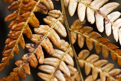 orange brown fern canonef100mmf28macrousm canoneos7d