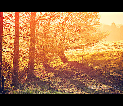 morning trees sun nature colors sunrise canon landscape flickr colours meadows 85mm canonef85mmf18usm