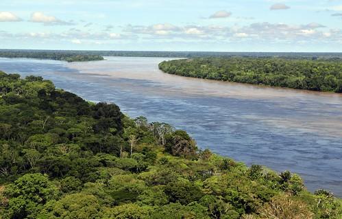 亞馬遜雨林。(來源:CIAT)