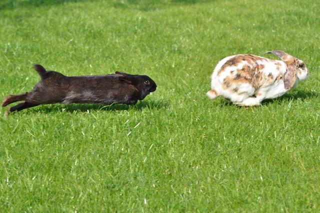 tierplanet aus liebe zum tier thema anzeigen fotos kaninchen im garten halter im gehege. Black Bedroom Furniture Sets. Home Design Ideas