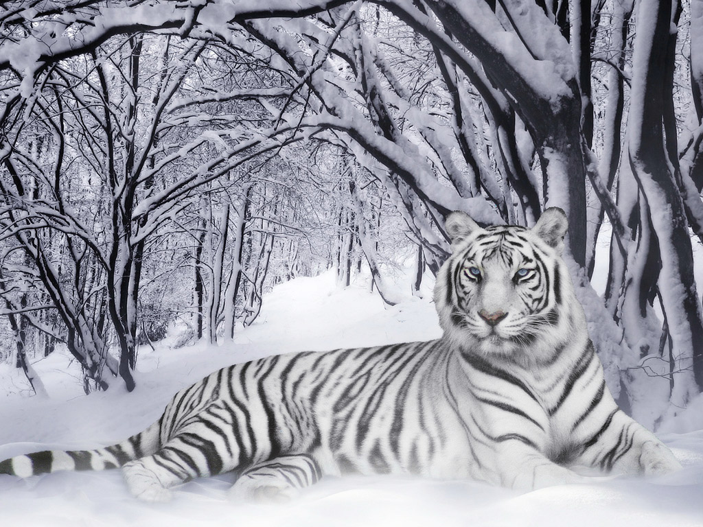 The White Tigress (Me) in Canada - a photo on Flickriver