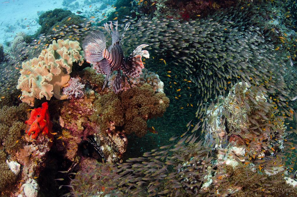 Arrecifes de Coral en Hurghada - Mar Rojo