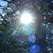 2003_0330_42_GGPark_SunTree