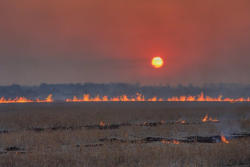 Burning Off