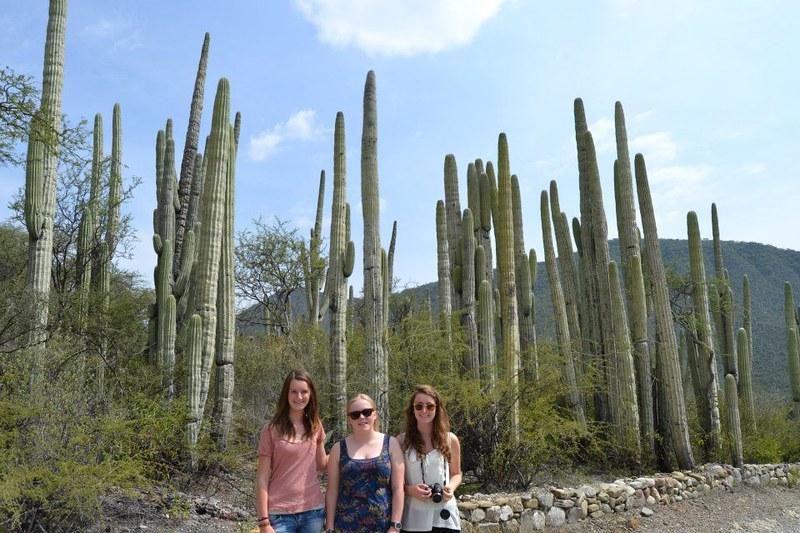 oaxaca-cactus.jpg