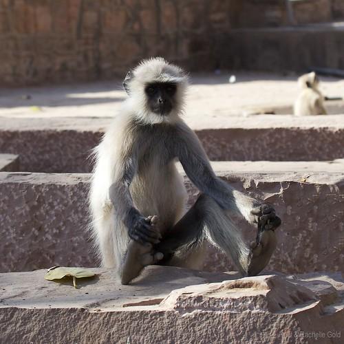 Upavishtha Konasana Monkey by rpgold