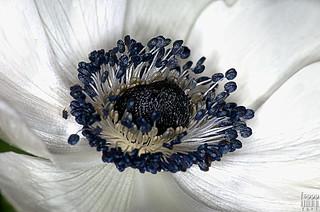 White 'n Blue