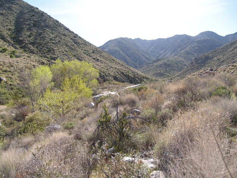 Looking back up Indian Canyon as we hike out