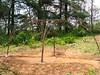 Grape Arbor of Rebar