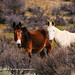 A Pair of Horses, Naneum Road - Kittitas County, Washington
