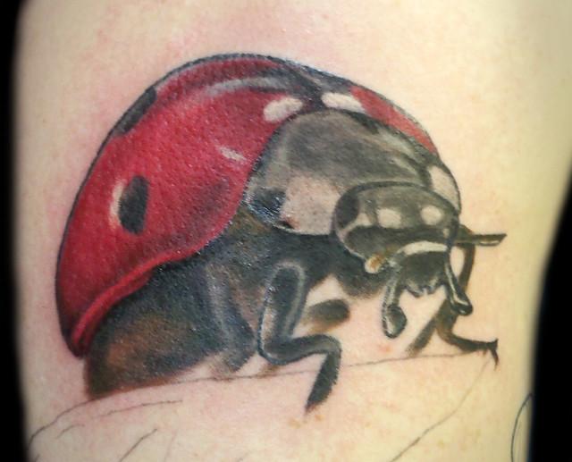 Ladybug in progress