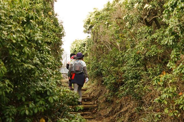 20110429_塔ノ岳(表尾根)_0050
