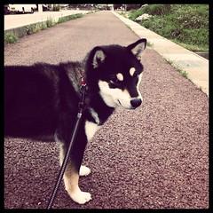 速く散歩続けてくれませんかと言わんばかりの顔