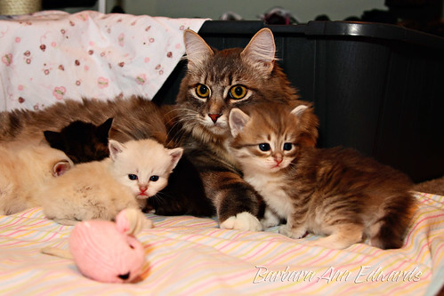 Sasha with her Babies