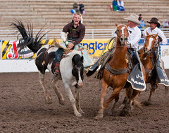 animal sports, rodeo, western riding, chilean rodeo, equestrian sport, sports, charreada, reining,