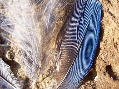 Stellar feathers