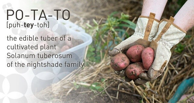 Growing Your Own Potatoes at Your Day