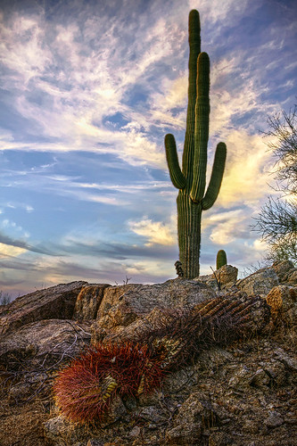 arizona cactus mountain phoenix canon south az hdr 50d qtpfsgui