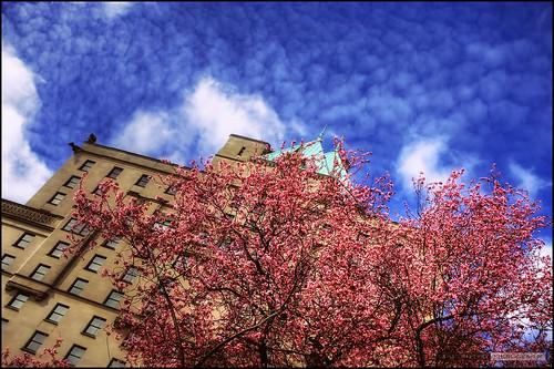 Springtime In The City