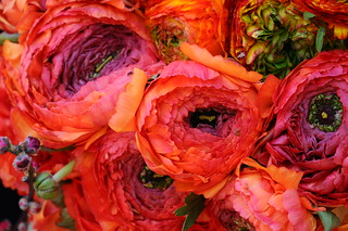 Ranunculus for Kate