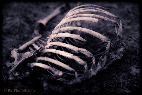 white landscape dead death flickr decay tint gone deer ribs bones bone spine rotten facebook deceased