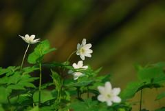 plants / pflanzen
