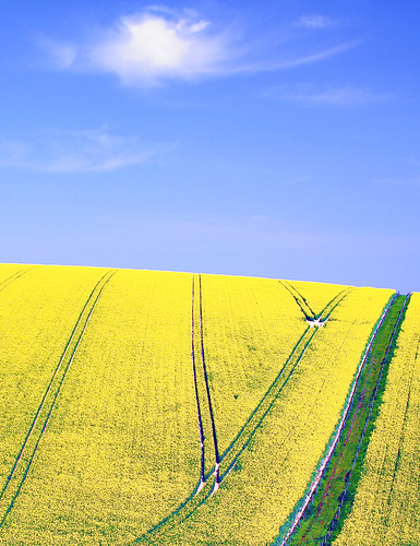 sussex landscapes fields crops