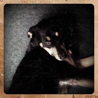 ELSIE LIE down rtro | Flickr - Photo Sharing!
