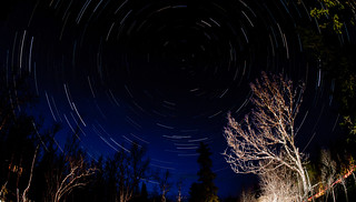 Star Trail with Tree