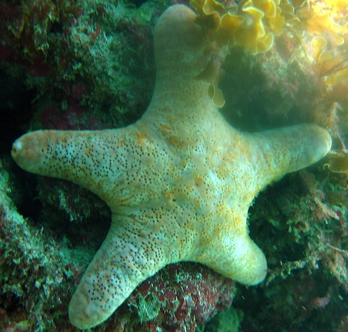 Anemic Patrick
