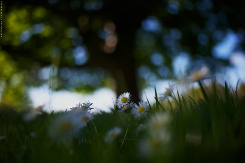• Under the bokeh tree •