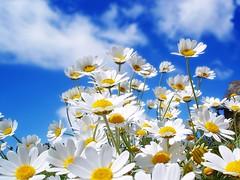 Feliz quinta-flower!!! by Ana Paula Louvem - Atelier Doce Sabor