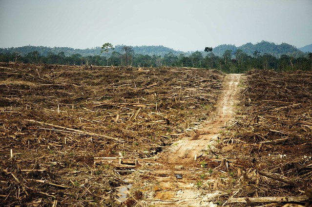 Cargill�s Problems With Palm Oil